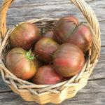 Alte Tomaten-Sorte