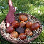 Osternest mit natürlich gefärbten Eieren