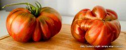 Alte fleischige Tomatensorte